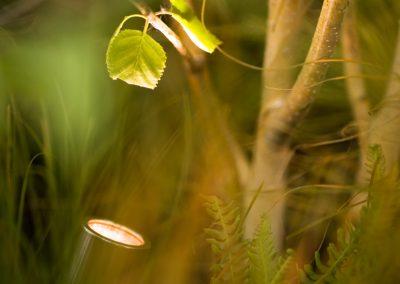 Scenic-Lighting-subtle-uplighting